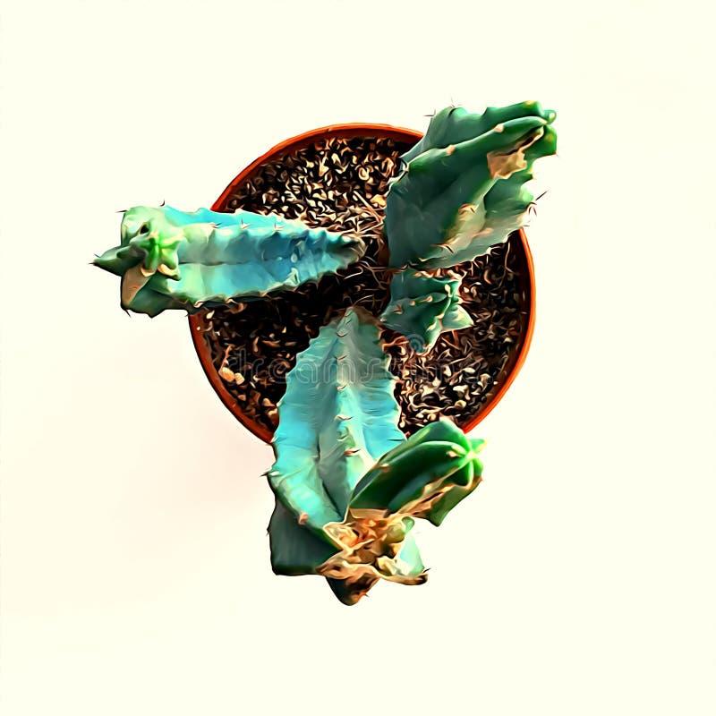 Coldsmall cactus plant isolé sur fond beige, melocactus en pot photo stock