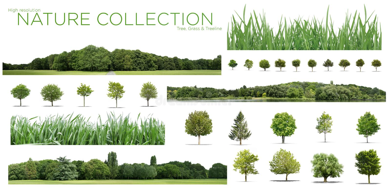 Coleção alta mesma da definição Treeline, da grama e da árvore isolada em um fundo branco fotos de stock royalty free