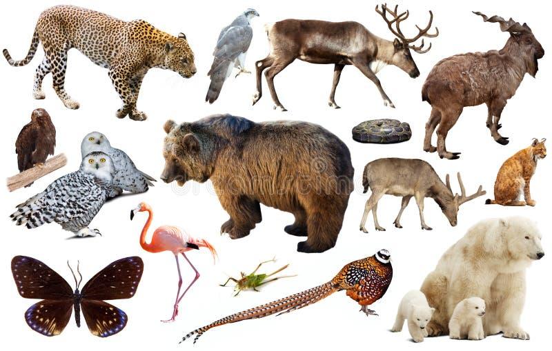Coleção animal Ásia fotos de stock royalty free