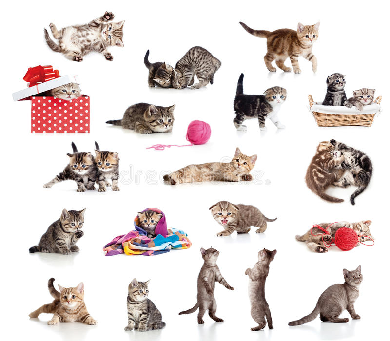 Coleção ativa dos gatinhos isolada no branco fotografia de stock royalty free