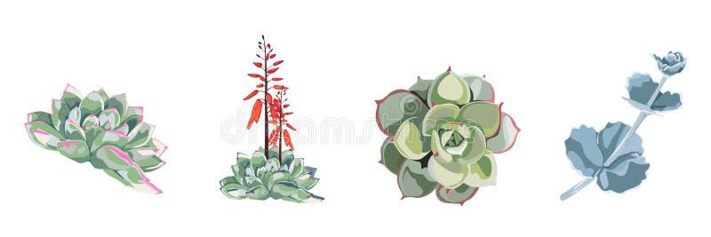 Coleção bonita tirada da aquarela da planta da flor mão suculento, grupo ilustração royalty free