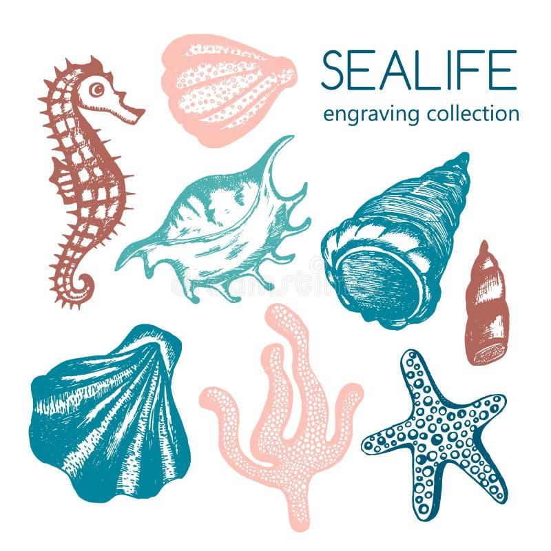 Coleção com conchas do mar, estrela do mar do mar, coral, cavalo marinho ilustração stock