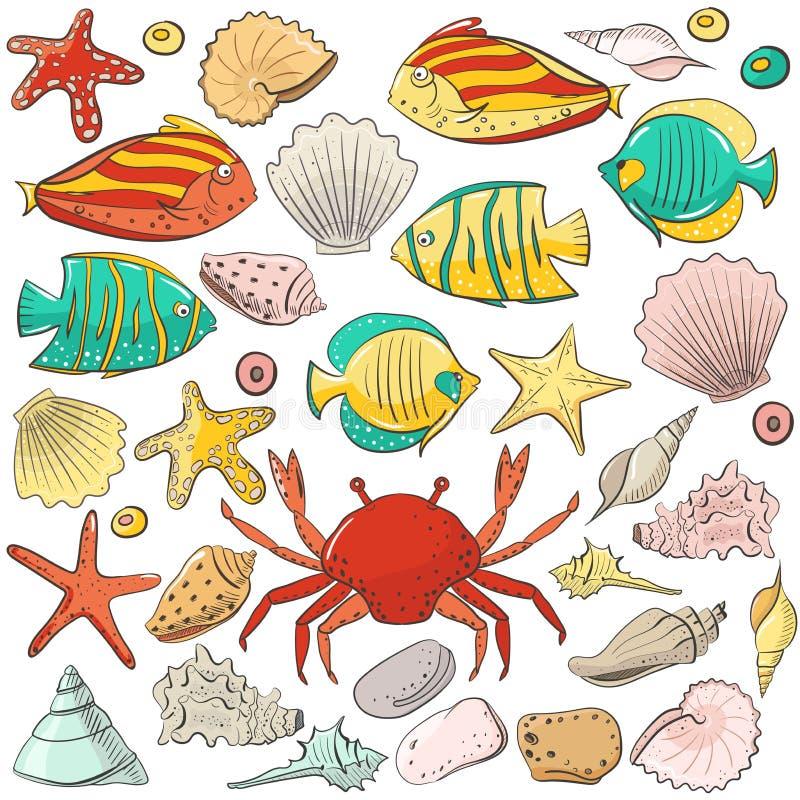Coleção com shell, estrela do mar, peixe, pedra Grupo do vetor para o projeto no estilo da praia do mar Shell exóticos coloridos ilustração do vetor