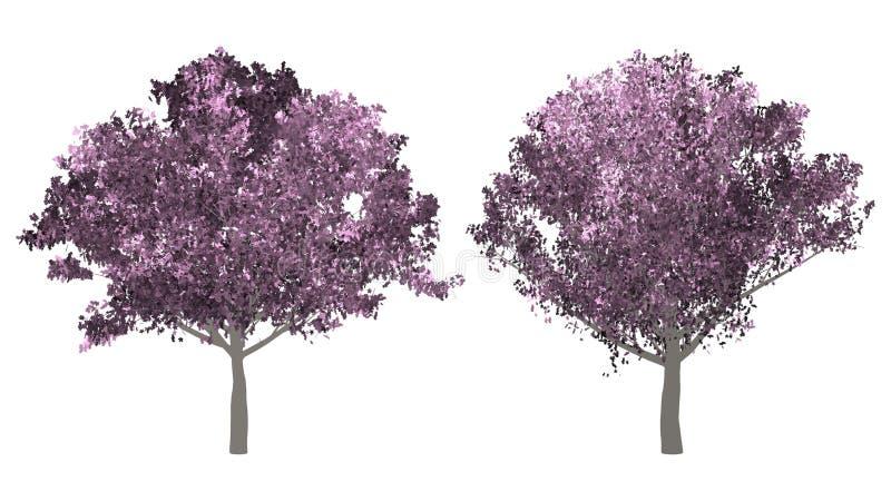 A coleção da árvore Árvore da flor de cerejeira isolada no fundo branco foto de stock