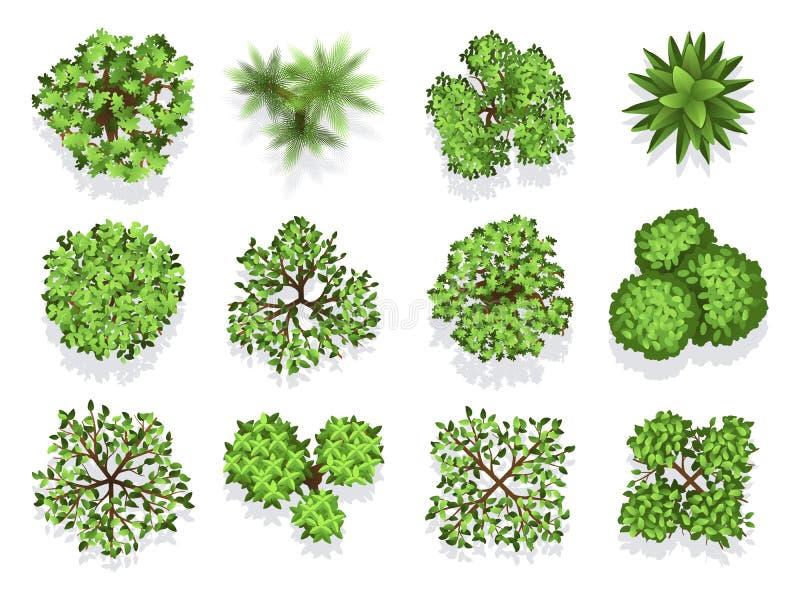 Coleção da árvore da vista superior - folha verde isolada no fundo branco ilustração stock