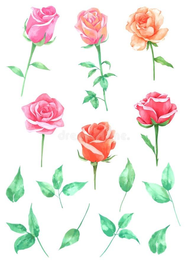 Coleção da aquarela das flores das rosas, mão tirada para o cartão ilustração stock