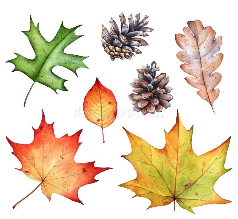 Coleção da aquarela das folhas de outono e dos cones do pinho em b branco foto de stock royalty free