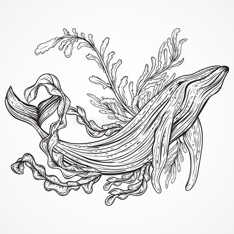 Coleção da baleia, de plantas marinhas, de folhas e de alga Grupo do vintage de mão preto e branco tirado vida marinha ilustração do vetor