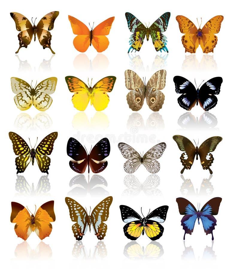 Coleção da borboleta ilustração do vetor