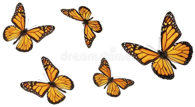 Coleção da borboleta de monarca ilustração stock