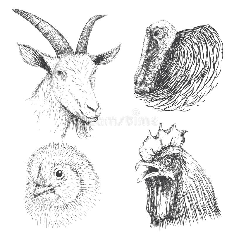 Coleção da cara dos animais de exploração agrícola ilustração do vetor