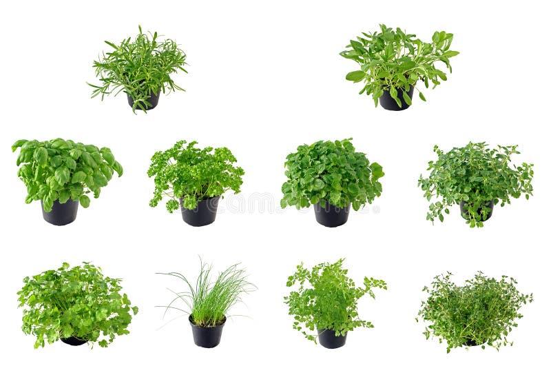 A coleção da erva foto de stock