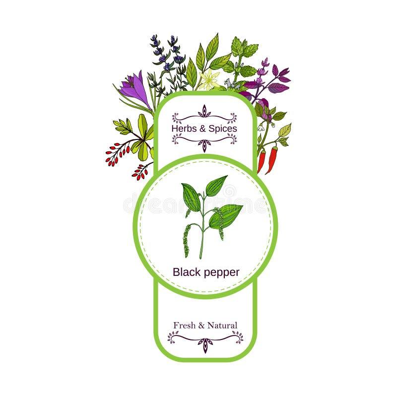 Coleção da etiqueta das ervas e das especiarias do vintage Pimenta preta ilustração do vetor