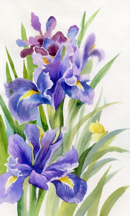 Coleção da flor da aquarela: Íris ilustração stock