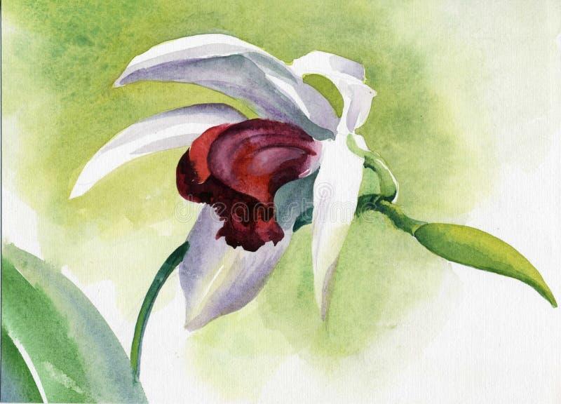 Coleção da flor da aguarela: Íris ilustração royalty free