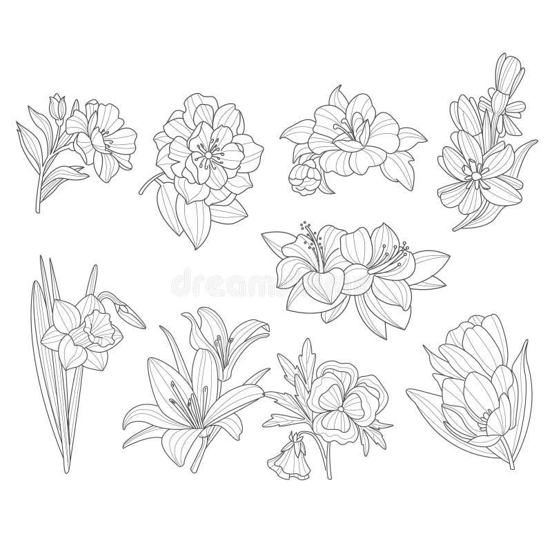 Coleção da flor Ilustração desenhada mão do vetor ilustração do vetor