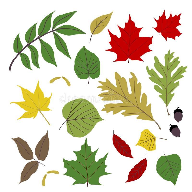 Coleção da folha
