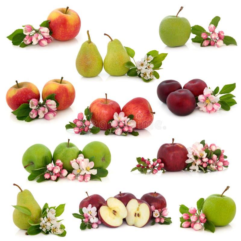 Coleção da fruta imagem de stock