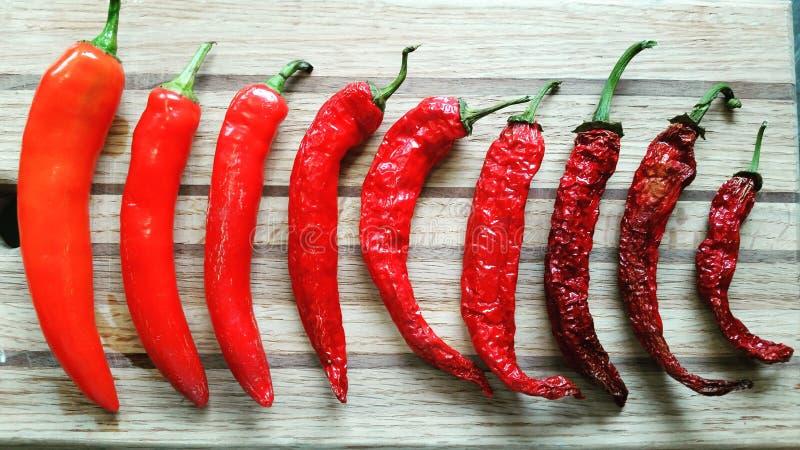 Coleção da pimenta vermelha fotografia de stock