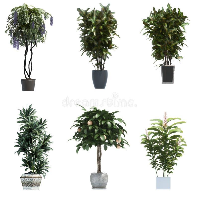 Coleção da planta 3D imagens de stock royalty free