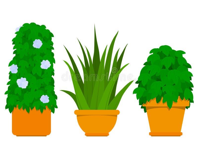 Coleção da planta interna - agave ilustração stock