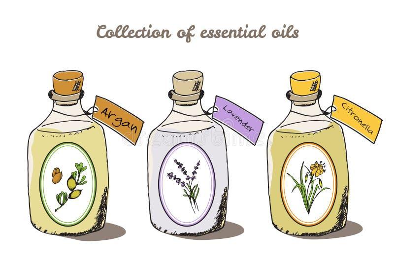 Coleção da saúde e da natureza Árvore do argão ilustração stock