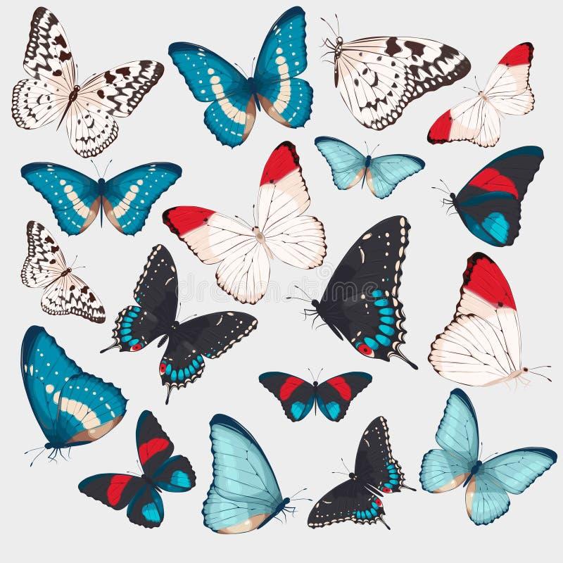 Coleção das borboletas ilustração do vetor