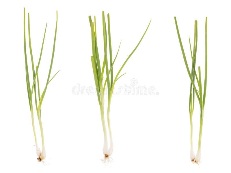 Coleção das cebolas verdes imagens de stock royalty free