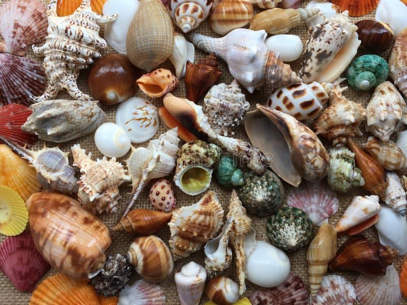 Coleção das conchas do mar coloridas Fundo surpreendente fotografia de stock royalty free