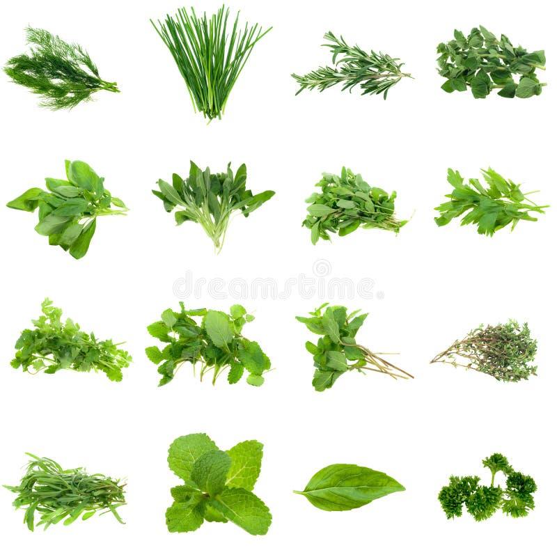 Coleção das ervas imagens de stock
