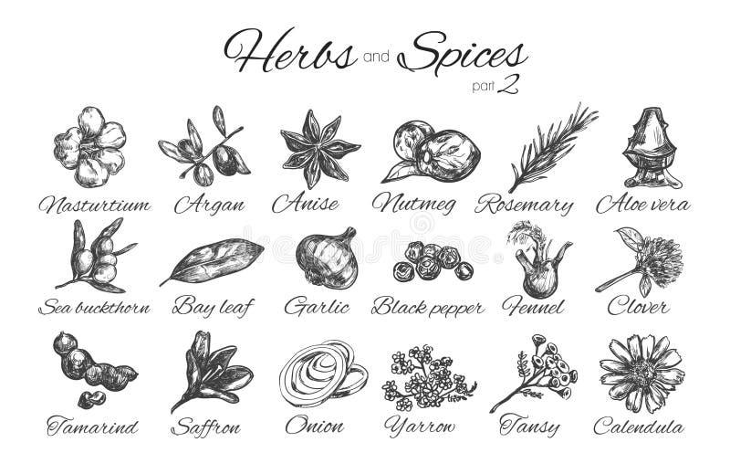 Coleção das ervas e das especiarias Ilustração desenhada mão do vetor Objetos isolados foto de stock