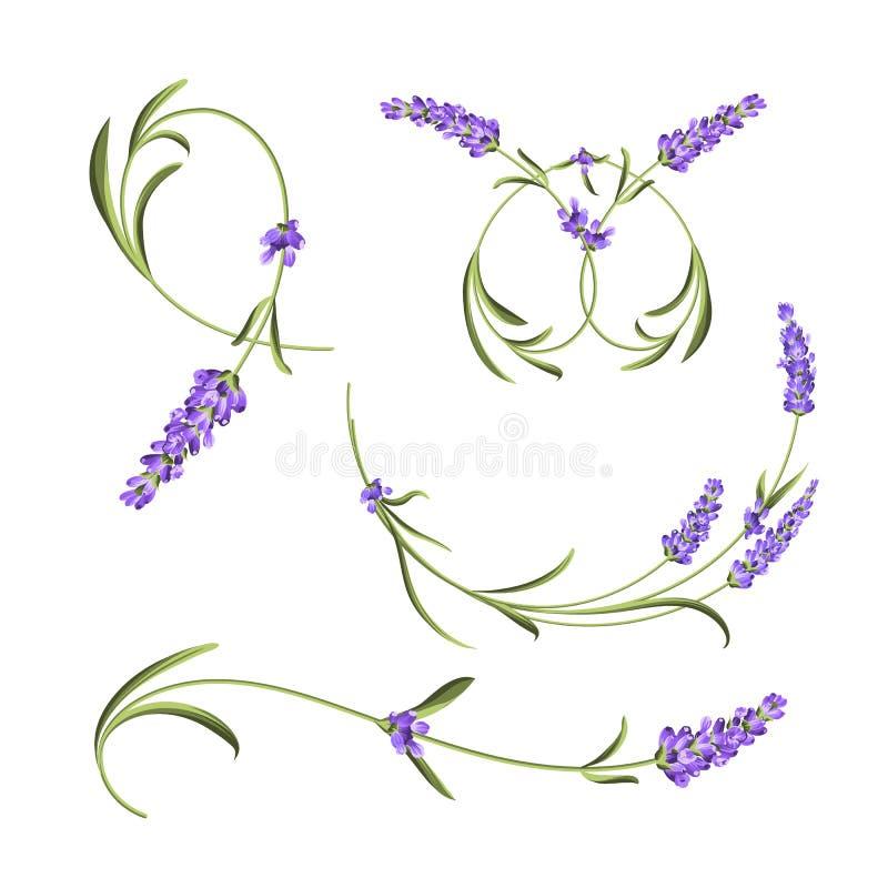 Coleção das flores de Provence O grupo de alfazema floresce elementos Jogo violeta das flores Pacote da cópia do verão da forma e ilustração do vetor