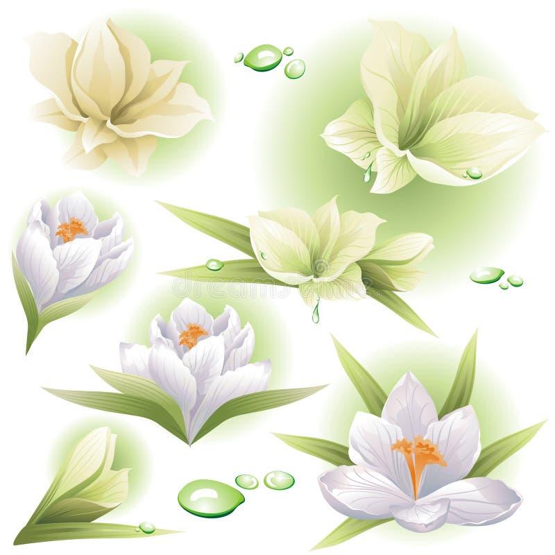 Coleção das flores e das gotas. ilustração royalty free