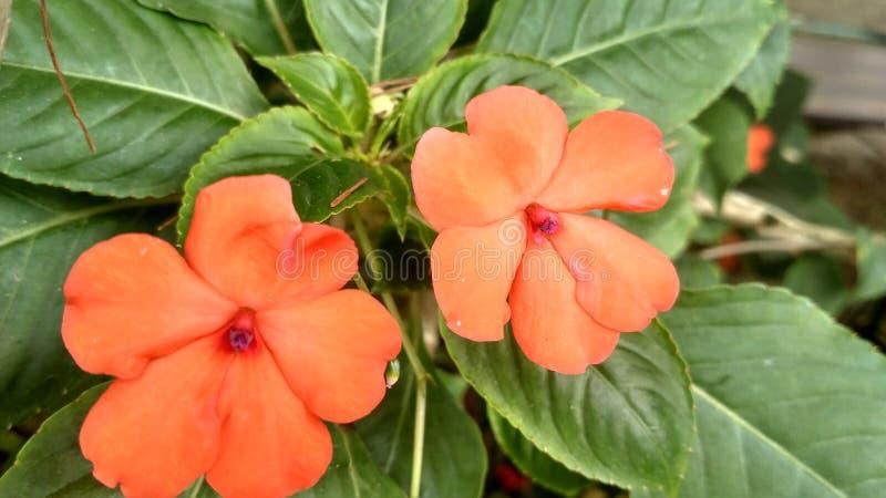 Coleção das flores em Taman Bunga Nusantara Indonésia imagem de stock royalty free