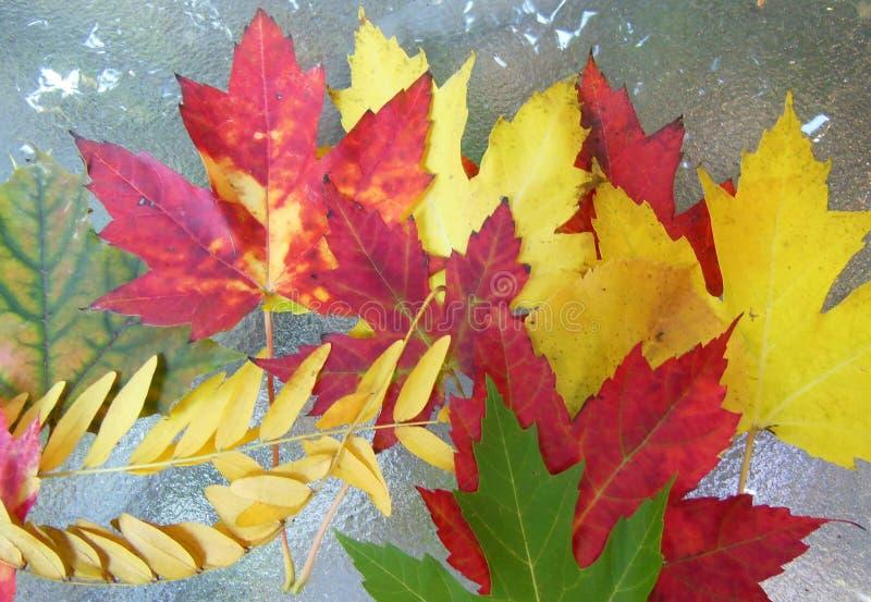 Coleção das folhas de outono na tabela imagem de stock royalty free