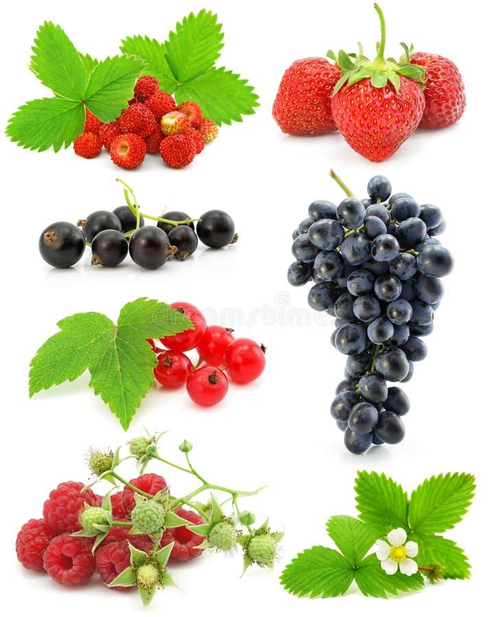 Coleção das frutas de baga isoladas no branco fotografia de stock