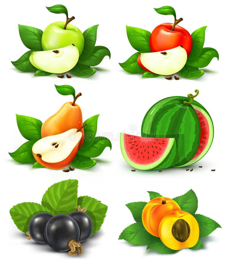 Coleção das frutas e das bagas com folhas verdes ilustração do vetor