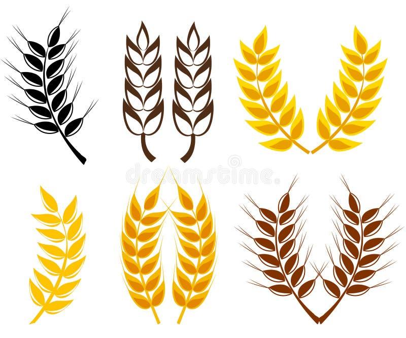 Coleção das orelhas do trigo e do centeio ilustração stock