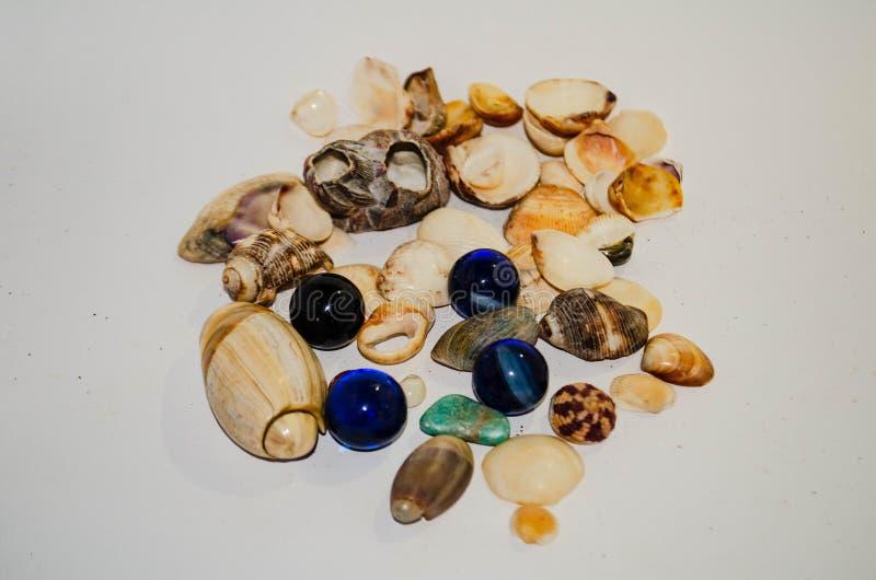 Coleção das pedras e dos shell foto de stock