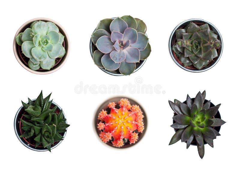 Coleção das plantas e dos cactos foto de stock royalty free