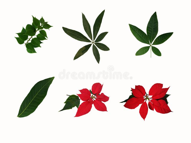 Coleção das várias folhas no fundo branco imagens de stock