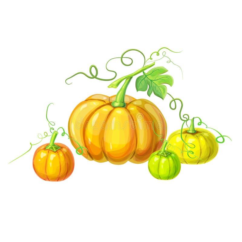 Coleção de abóboras maduras realísticas com haste, folhas verdes, gavinhas encaracolados isoladas no branco mão bonita tirada ilustração do vetor