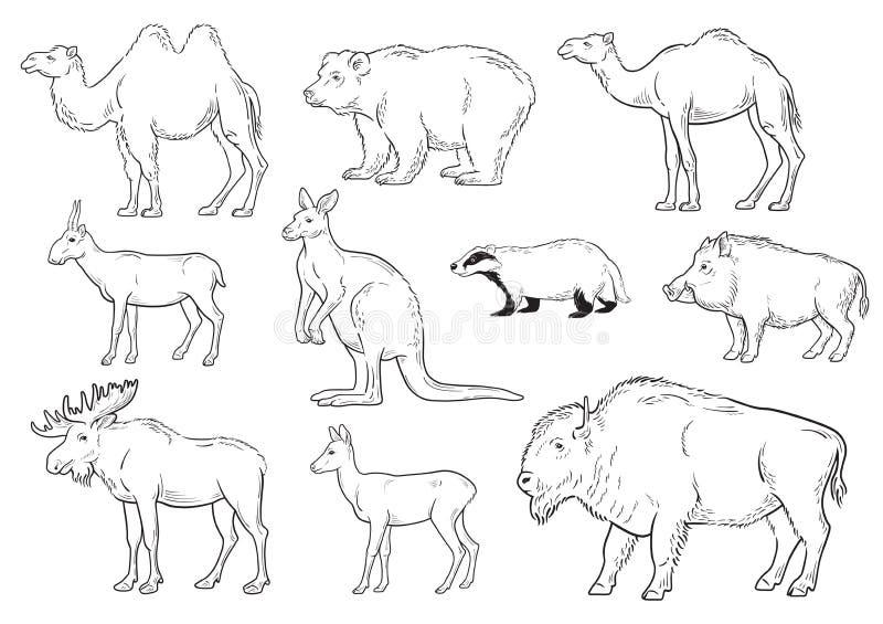 Coleção de animais selvagens no fundo branco ilustração stock