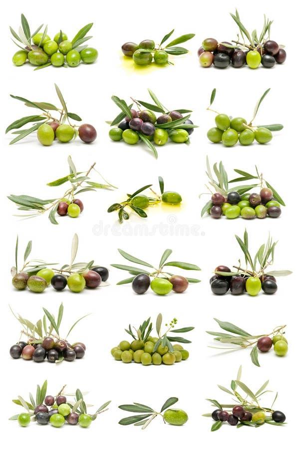 Coleção de azeitonas frescas fotos de stock