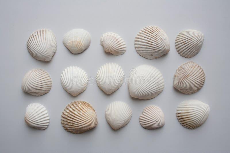 Coleção de conchas do mar da vieira no fundo branco de cima de fotografia de stock