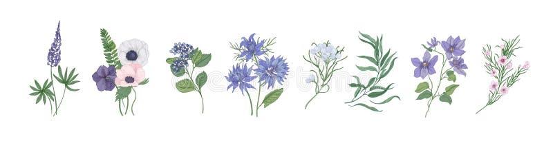 Coleção de desenhos detalhados de flores floristic na moda e das plantas de florescência decorativas isoladas no fundo branco ilustração royalty free