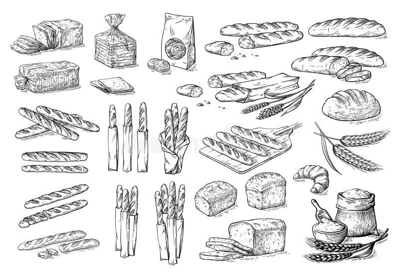 Coleção de elementos naturais do esboço do pão e da farinha ilustração do vetor