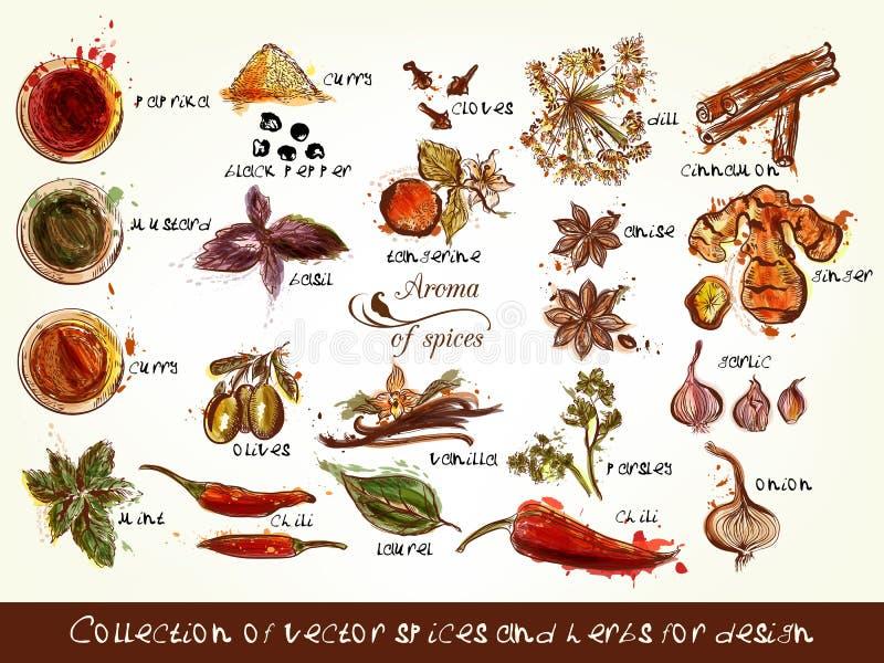 Coleção de especiarias e de ervas do vetor para o projeto ilustração stock