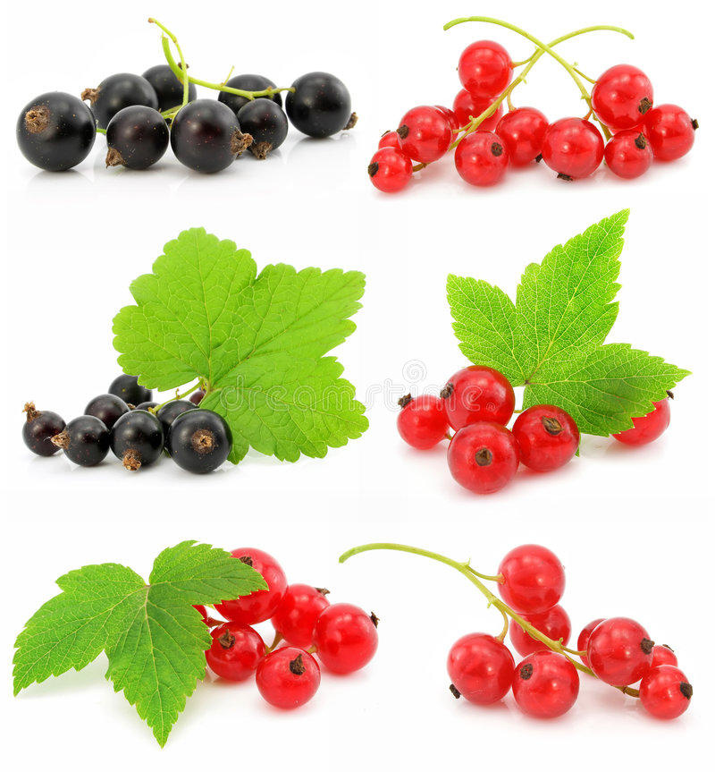 Coleção de frutas da passa de Corinto preta e vermelha imagem de stock