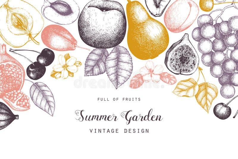 Coleção de ilustrações maduras dos frutos - figo do vintage, maçã, pera, pêssego, abricó, caqui, romã, marmelo, uvas Mão ilustração royalty free